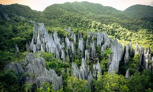The Pinnacles, Gunung Mulu national park, Malaysia