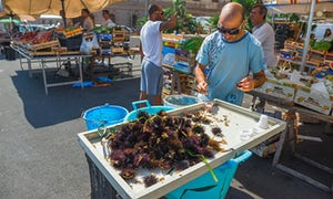 Freshly caught sea urchins in the market in Ortigia, Siracusa.