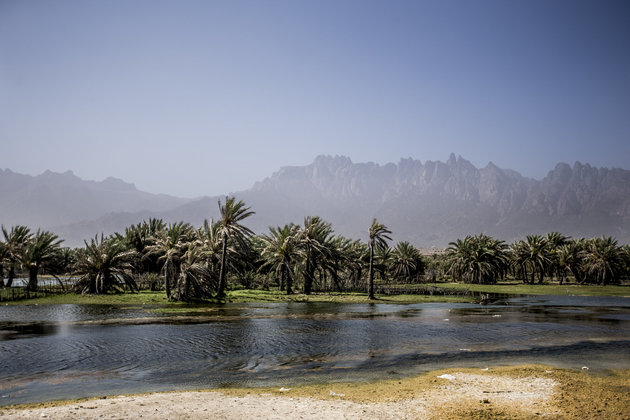 Unusual landscapes in Socotra, Yemen.
