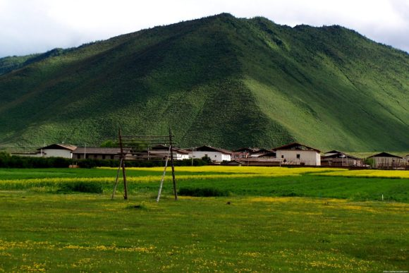 residential-area-near-the-grassland-adventure-park