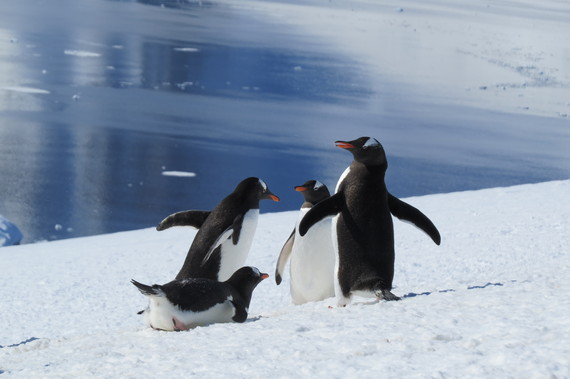 Antarctic Adventures
