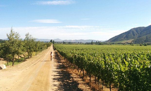 Explore Colchagua valley on two wheels