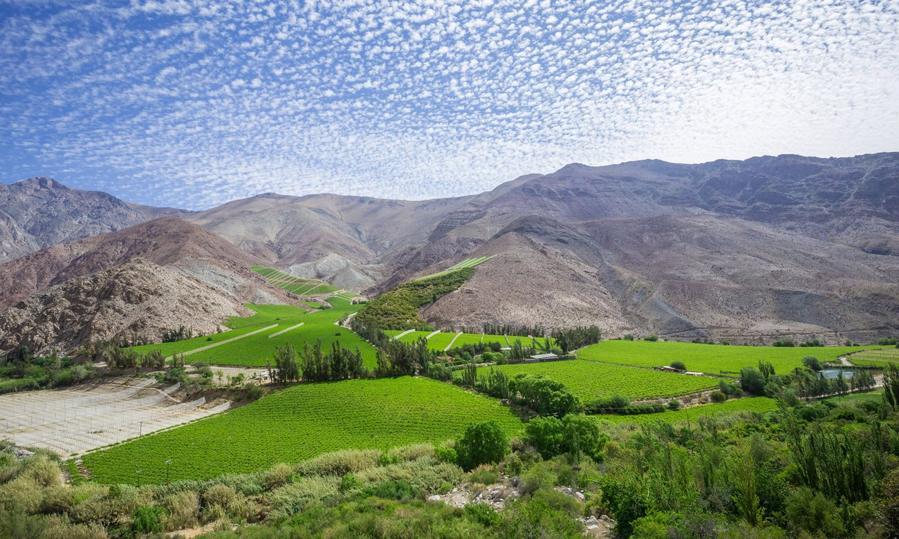 Green and pleasant … Elqui valley, Chile
